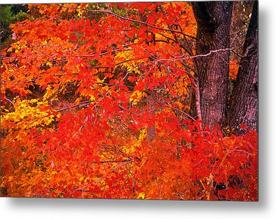 Carolina Autumn Metal Print by Marion Johnson