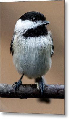 Metal Print featuring the painting Carolina Chickadee by John Haldane