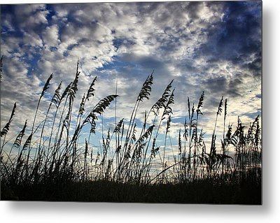 Carolina Sea Oats Metal Print