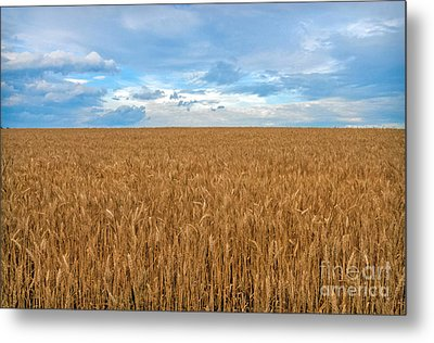 Carolina Wheat Field Metal Print by Marion Johnson