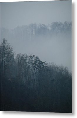 Carolina Winter #1 Metal Print