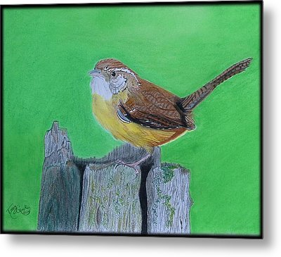 Carolina Wren Metal Print