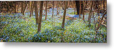 Carpet Of Blue Flowers In Spring Forest Metal Print