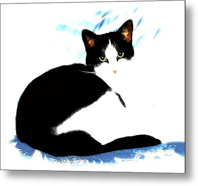Casey Metal Print by Dale   Ford
