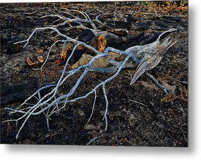 Casualties Metal Print by Randal Bruck