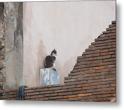 Metal Print featuring the photograph Cat Above The Roman Ruins by Tiffany Erdman