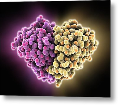 Cat Allergen Protein, Molecular Model Metal Print by Science Photo Library