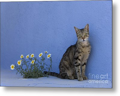 Cat And Flowers In Greece Metal Print