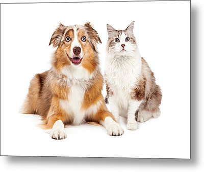 Cat And Happy Dog Together Metal Print