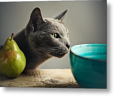 Cat And Pears Metal Print