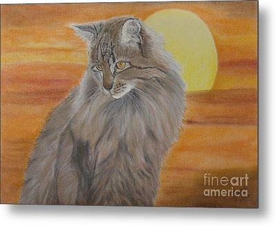 Cat And Sunset  Metal Print by Cybele Chaves