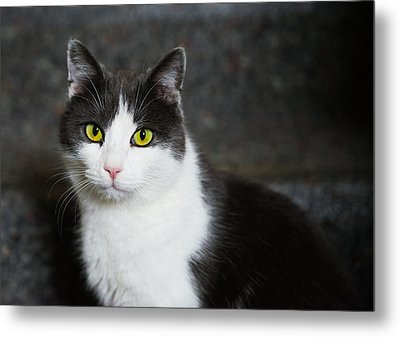 Cat Black And White With Green And Yellow Eyes Metal Print by Matthias Hauser