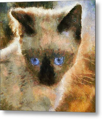 Cat Blue Eyes Metal Print by Yury Malkov