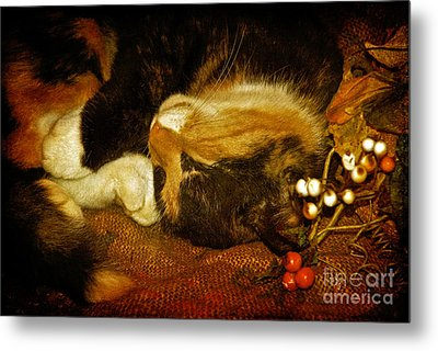 Cat Catnapping Metal Print by Lois Bryan