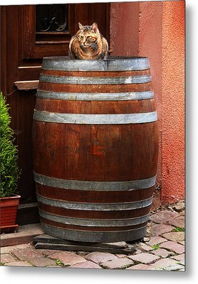 Cat Guarding A Wine Barrel In Alsace Metal Print by Greg Matchick