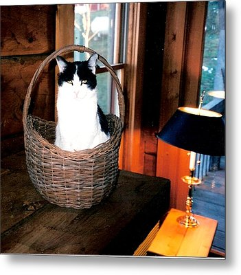 Cat In A Basket Metal Print by Sharon Blanchard