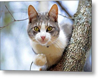 Cat In A Tree Metal Print by Susan Leggett