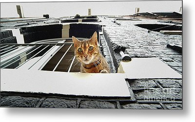 Cat In Amsterdam Metal Print