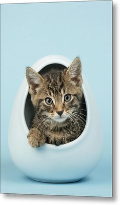 Cat In Egg Metal Print
