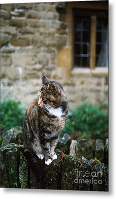 Cat In England Metal Print by James L. Amos