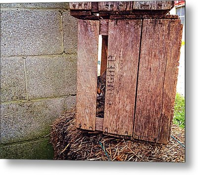 Cat In Hiding Metal Print
