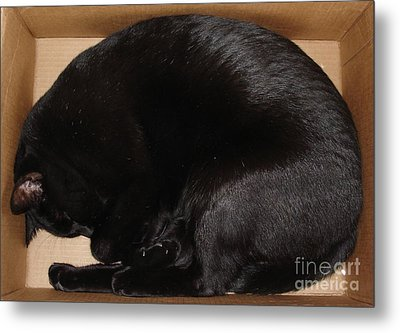 Metal Print featuring the photograph Cat In The Box by Kerri Mortenson