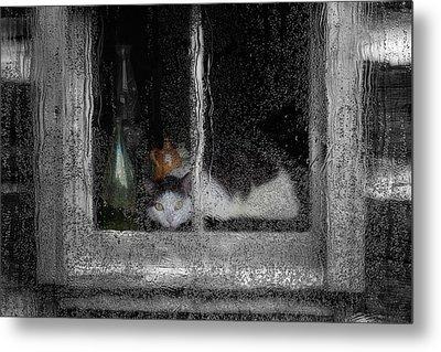 Cat In The Window Metal Print by Jack Zulli