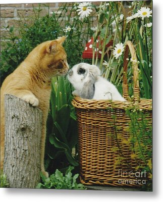 Metal Print featuring the photograph Cat Kisses Rabbit by Jeepee Aero