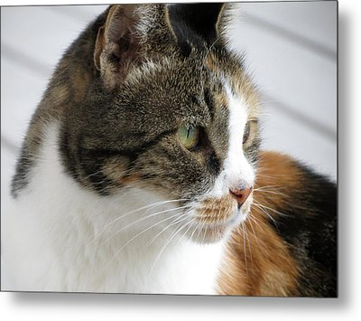 Metal Print featuring the photograph Cat by Laurel Powell