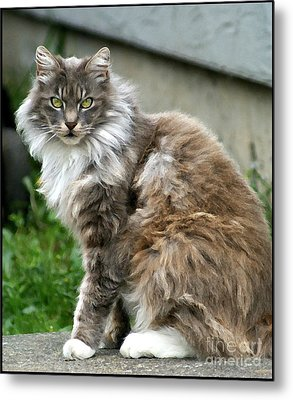 Metal Print featuring the photograph Cat by Leslie Hunziker