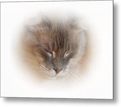 Cat Nap Metal Print by Connie Handscomb