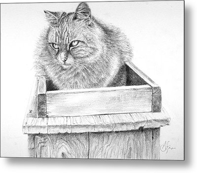 Cat On A Box Metal Print