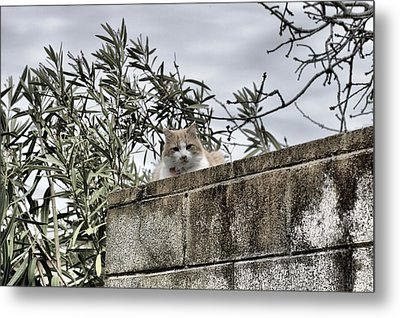 Cat On A Cold Green Wall Metal Print