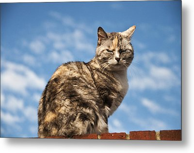 Cat On A Hot Brick Wall Metal Print by Steve Purnell