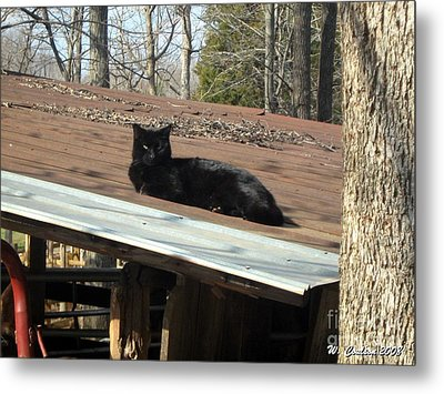 Cat On A Tin Roof Metal Print by Wendy Coulson