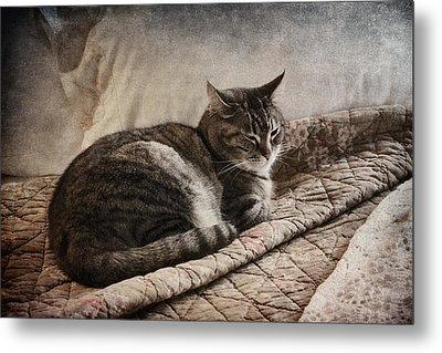 Cat On The Bed Metal Print by Carol Leigh