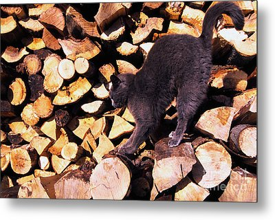 Cat Stretching On Firewood Metal Print by Thomas R Fletcher