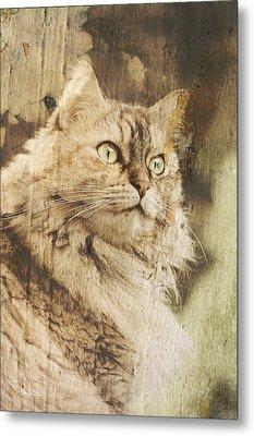 Cat Texture Portrait Metal Print by Raffaella Lunelli
