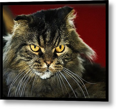 Cat With An Attitude Metal Print