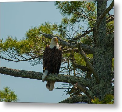 Catch Of The Day Metal Print by Brenda Jacobs