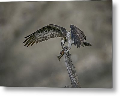 Catch Of The Day Metal Print by Gary Hall