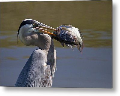 Catch Of The Day Metal Print by Regina  Williams