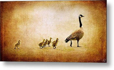 Metal Print featuring the photograph Catch Up Little Gosling by Lisa Knechtel