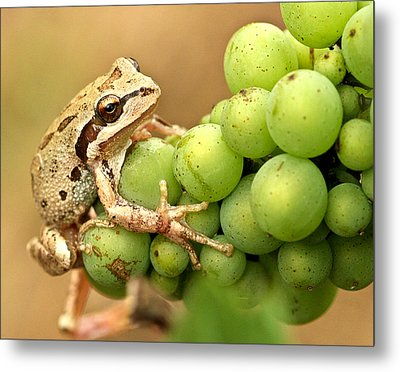 Catching A Ride On The Pinot Metal Print