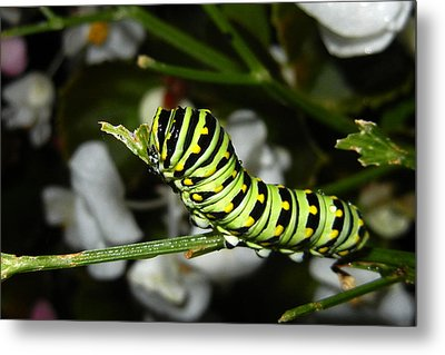 Metal Print featuring the photograph Caterpillar Camouflage by Bill Swartwout