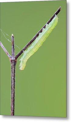 Caterpillar Metal Print by Heath Mcdonald