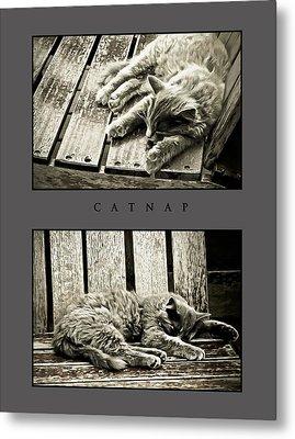 Catnap Metal Print by Greg Jackson