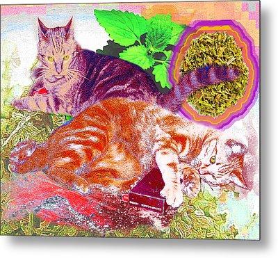 Catnip Boy Metal Print by Alice Ramirez