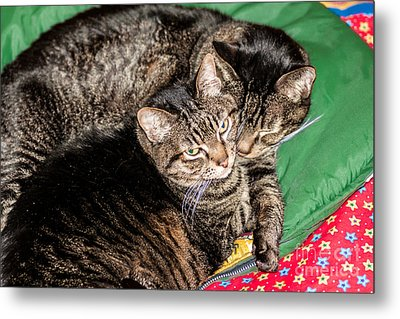 Cats Cuddling Metal Print by Sue Smith