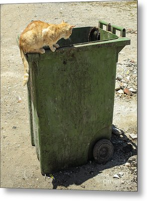 Cats On And In Garbage Container Metal Print by Patricia Hofmeester